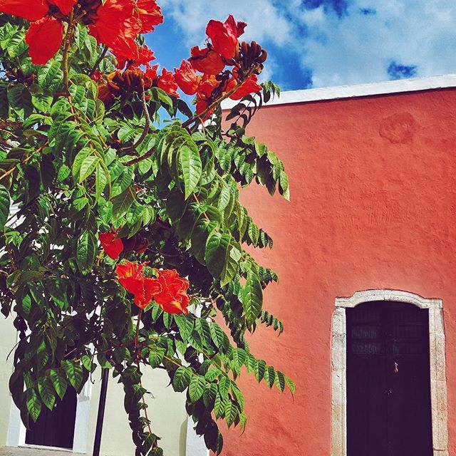 Mexico    . #façade #flowers #mexico #colors #vivamexico