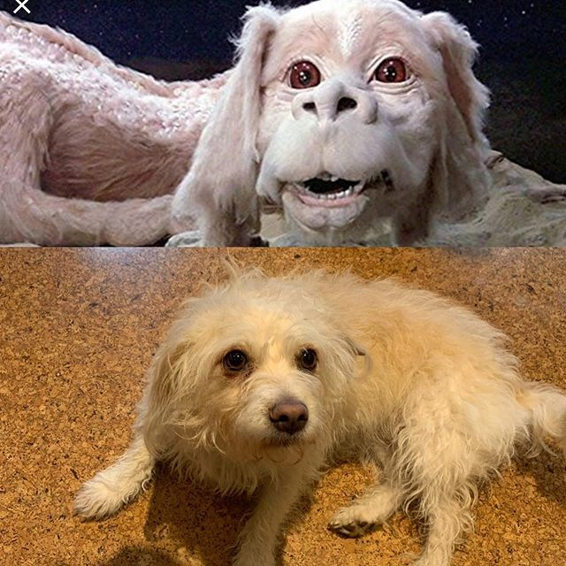 Happy belated Christmas from Falkor